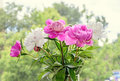 Pink and white peony flowers with bud, transparent vase