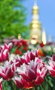 Pink and white tulips on the background of Orthodox church dome Royalty Free Stock Photo