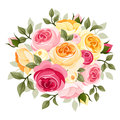Pink and yellow roses illustration of english rose buds leaves isolated on a white background Stock Images