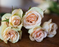 Pink and yellow tea roses Royalty Free Stock Photo