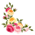 Pink and yellow vintage roses. Royalty Free Stock Photo