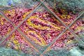 Pink and yellow wool is reflected in a glass tile