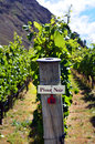 Pinot noir sign on grape vine in gibbston valley in otago south island of new zealand Royalty Free Stock Photo