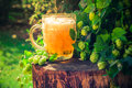 Pint golden beer wooden trunk Royalty Free Stock Photo