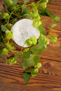 Pint and hop plant Royalty Free Stock Image