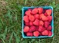 Pint of Raspberries Royalty Free Stock Photo