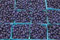 Pints of Blue Berries Royalty Free Stock Photo