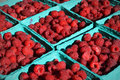 Pints of red raspberries at the dane county farmer s market in madison wi Royalty Free Stock Images
