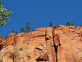 Pinyon pine on red sandstone cliffs zion national park trees top of huge Stock Photo