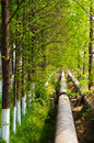 Pipeline in the woods an oil laying green wood Royalty Free Stock Images