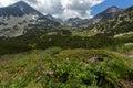 Pirin mountain landscape whit cloud adn flowers bulgaria Royalty Free Stock Photo