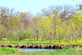 Piscasaw fen conservation area illinois spring flowers bloom at in northern Royalty Free Stock Photos