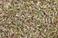 Pistachio nut without peel Stock Photos