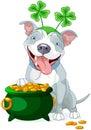Pit bull celebrates saint patrick day illustration of cute Royalty Free Stock Photos