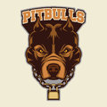 Pit Bull Head Mascot Royalty Free Stock Photo