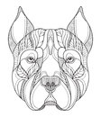 Pit bull terrier head zentangle, doodle stylized, vector, illust Royalty Free Stock Photo