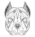 Pit bull terrier head zentangle stylized, vector, illustration Royalty Free Stock Photo