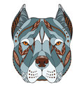 Pit bull terrier head zentangle stylized, vector, illustration, Royalty Free Stock Photo