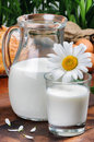 Pitcher of fresh milk with daisy glass and Royalty Free Stock Image