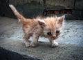 A pity kitty Royalty Free Stock Photo
