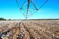Pivot in over cotton field ready for harvest the center of to Royalty Free Stock Image