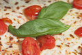 Pizza basil leaves in italian Royalty Free Stock Photo