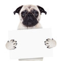 Placard banner dog Royalty Free Stock Photo