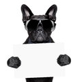 Placard dog holding a blank or banner Stock Images