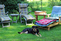 Place relaxation garden dog waiting Royalty Free Stock Images