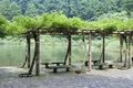 Place for the rest fresh wisteria branches entwined forming arbor next to pond in japanese summer park Royalty Free Stock Photos
