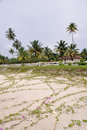 Plage au Kerala, (l'Inde) Photo stock