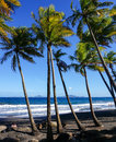 Plage de grande anse in trois rivières guadeloupe black sand beach france Stock Photography