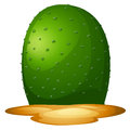 A plain cactus illustration showing on white background Royalty Free Stock Photo