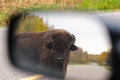 Plains Bison Stock Photos