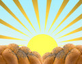Plaited white bread and the  sun. Stock Image