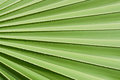 Plam Leaf BlackGround Royalty Free Stock Photography