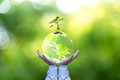 Planet and tree in human hands over green nature, Save the earth concept, Royalty Free Stock Photo
