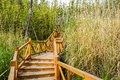 Planked stairway in bamboo and reeds on sunny spring day Royalty Free Stock Photo