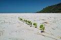 Plant On The Beach