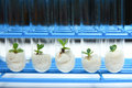 Plant biotechnology Series 1 Royalty Free Stock Images