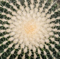 Plant cactus background leaf close up with spider web pattern Stock Images