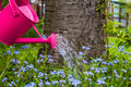 Plant Care Watering Spring Flo...