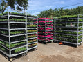 Plant on carts of flower store Royalty Free Stock Photo