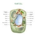 Planta célula