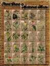 Plant chart of medicinal herbs vintage style for visual educational purpose learn what each herb looks like use for a poster wall Stock Photography