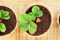 Plant close up. Royalty Free Stock Photo