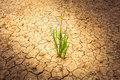 Plant on cracked soil and dry in dry season Royalty Free Stock Photo