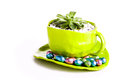 Plant in a cup with chocolates image of baby fat big paper mache tea small chocolate eggs on the saucer Stock Images