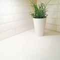 Plant decorating kitchen corner in elegant vase Stock Image
