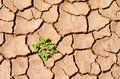 Green plant in dry desert, cracked land Royalty Free Stock Photo